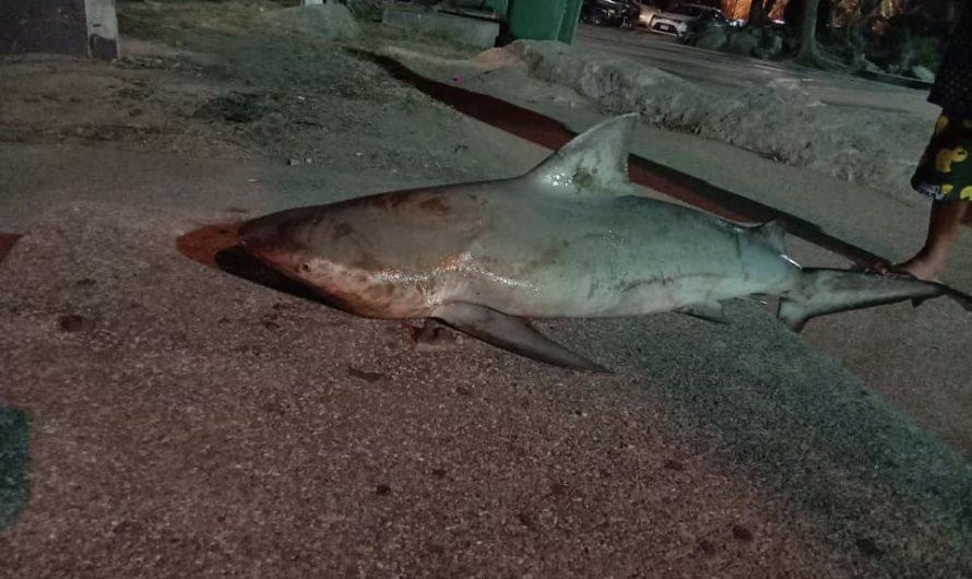 ระทึก! ฉลามบุกหาดบางแสน ติดเบ็ดหนุ่มคนตก ยันไม่เป็นอันตรายนักท่องเที่ยว