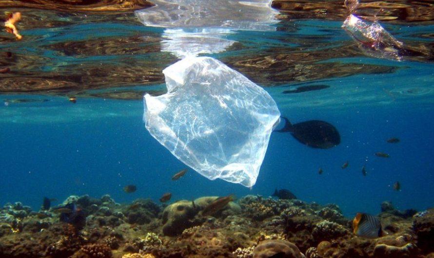 ถุงพลาสติก :  เลิกแจกถุงแล้วลดขยะได้จริงหรือ!!!